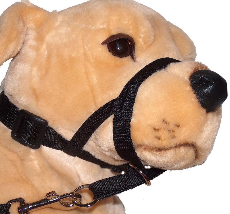 museli re collier halti pour dressage du chien taille 5. Black Bedroom Furniture Sets. Home Design Ideas